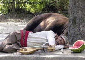 гъдулар с мечка
